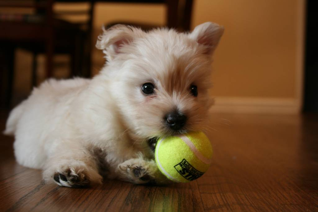 foto How to Choose a Puppy to Keep from Your Litter