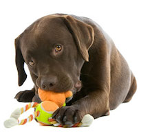dog_with toys