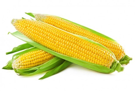 Can You Give Dog Corn On The Cob