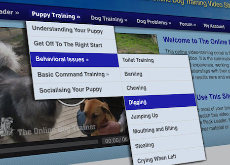 Puppy Training - A very useful section of the website