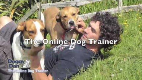 Only gentle dog training methods