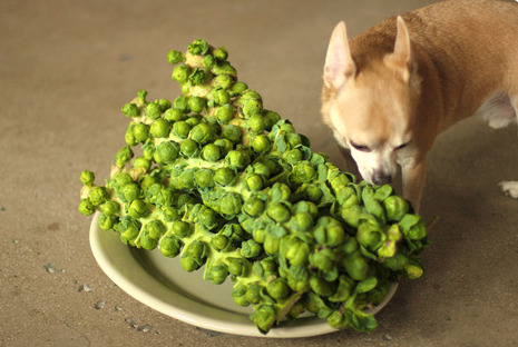 Can Dogs Eat Brussel Sprout