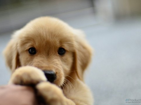 cute puppy and dog pictures - too cute