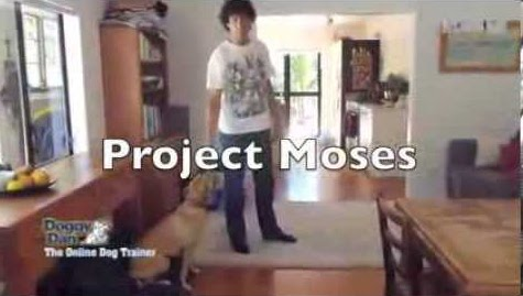 Project Moses - Watch Doggy Dan train his own dog from just 8 weeks old