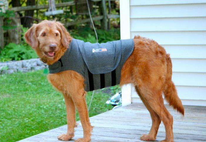 Dog Thunder Coat Review
