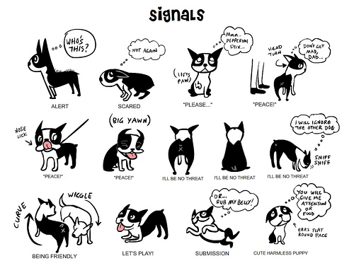 dog-body-language understanding your pooch