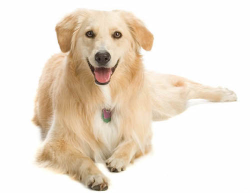 relaxed dog with normal body posture