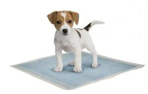 Dog on training pad