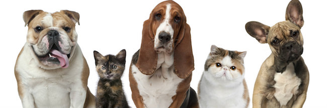Dogs-and-cats together