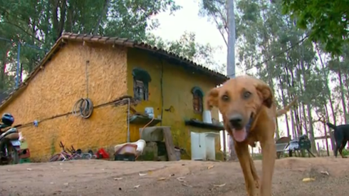 Lilica-the-dog travels 8 miles to feed her family 4