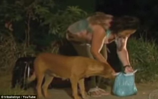 Lilica-the-dog travels 8 miles to feed her family 8