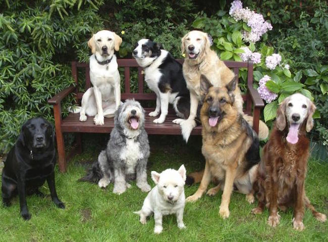 dogs have larger brains because they are more social