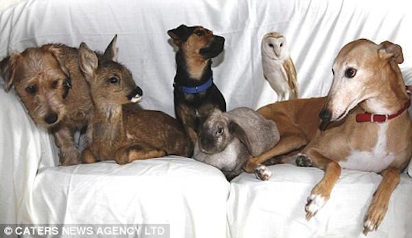 Jasmine - The 'Surrogate Mom' Animal Shelter Greyhound 2