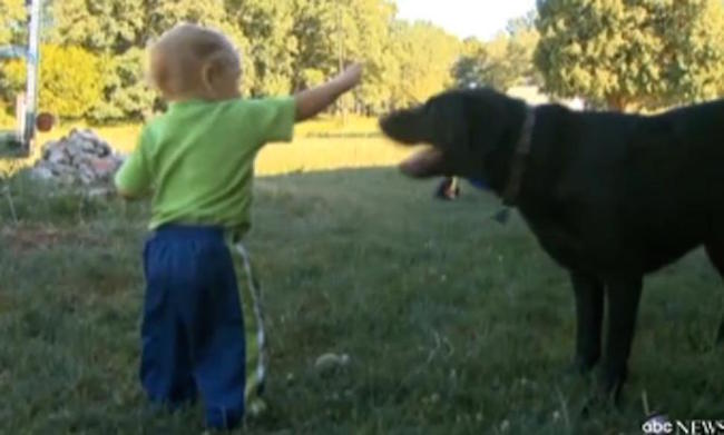 Hero dog saves 14-month-old boy from drowning in the family pool 3