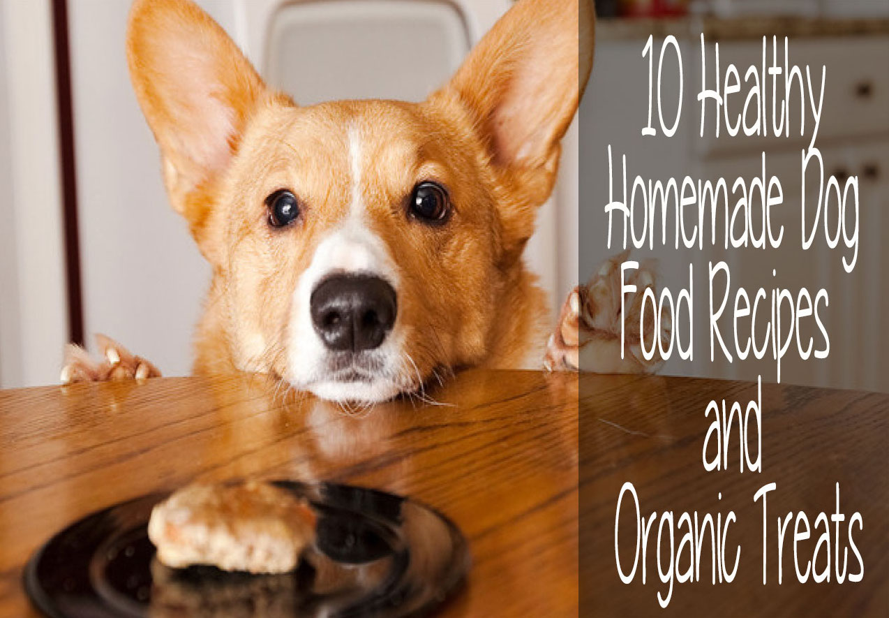 Homemade Organic Cat Food Recipes