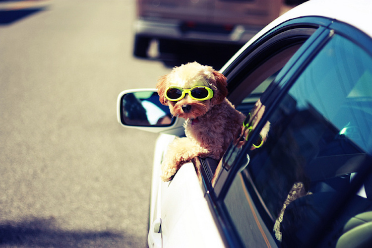 31 Dogs Loving The Wind In Their Hair 11