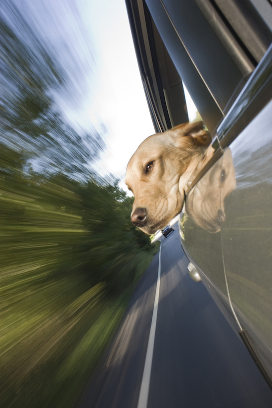 31 Dogs Loving The Wind In Their Hair 18