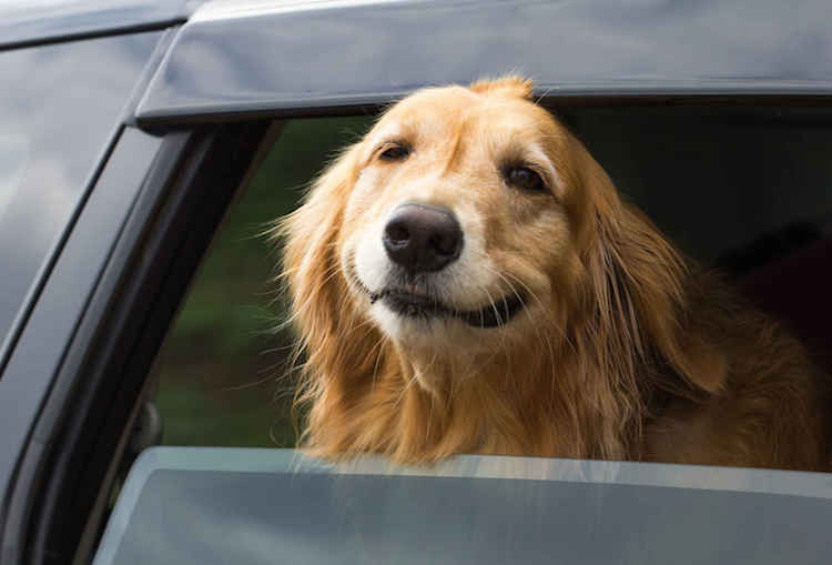31 Dogs Loving The Wind In Their Hair 28
