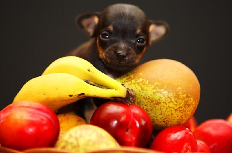 healthy dried fruit snacks what fruits can dogs eat
