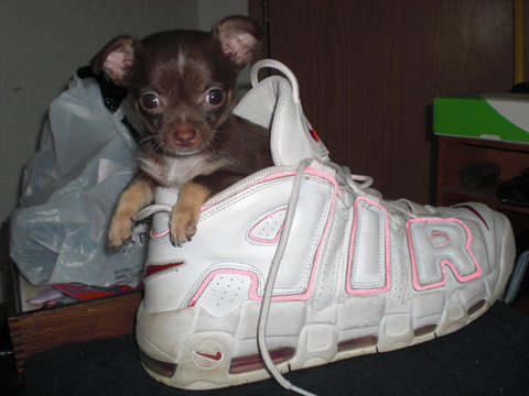 22 Of The Most Adorable Puppies In Shoes 3