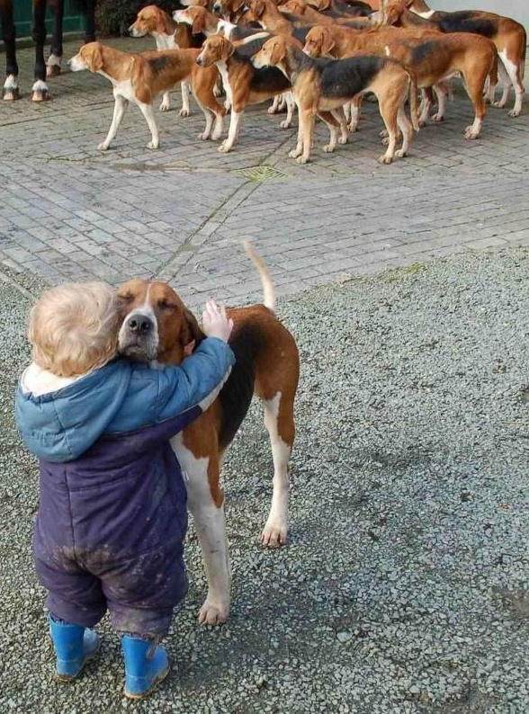 31 Heart Warming Images Showing The Magical Bond We Have With Our Dogs 10