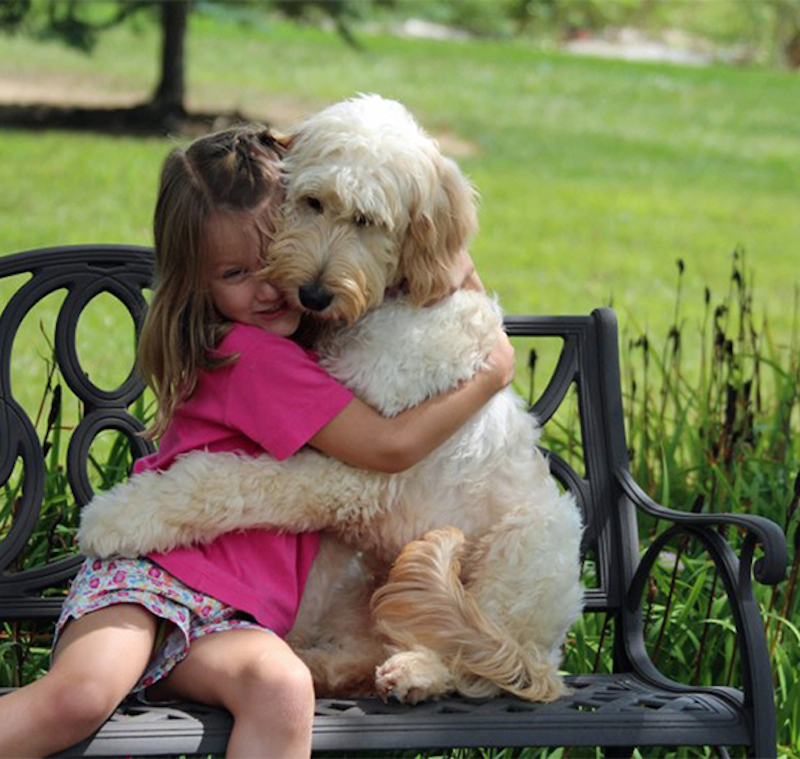 31 Heart Warming Images Showing The Magical Bond We Have With Our Dogs 14