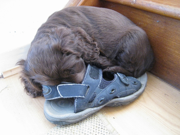 puppy in a sandal