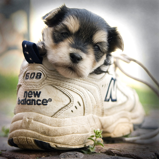 puppy in a trainer