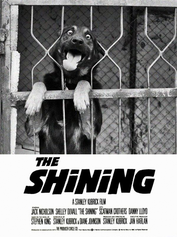 can dogs eat this - the shining