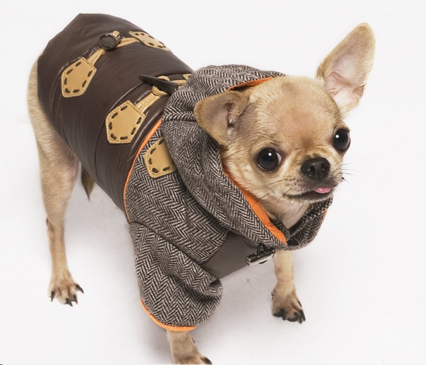 Dogs in Winter Outfits