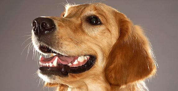 dog with cleen teeth