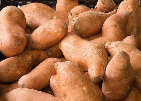 sweet-potatoes can dogs eat them