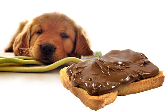 dog_and chocoloate