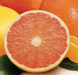 grapefruit for dogs