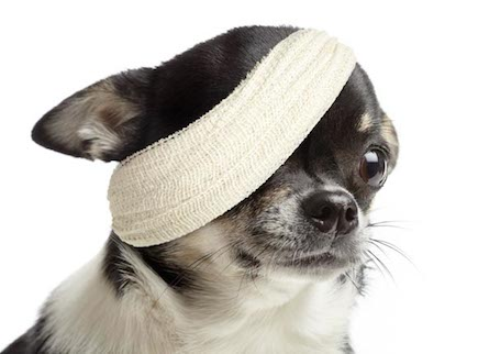 dog health insurance insert