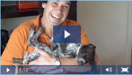 Doggy_Dan - over 250 videos online