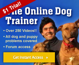 Online Dog Trainer