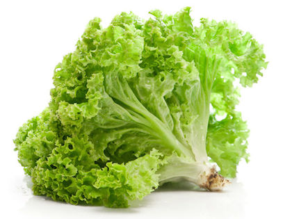 can dogs eat lettuce leaves