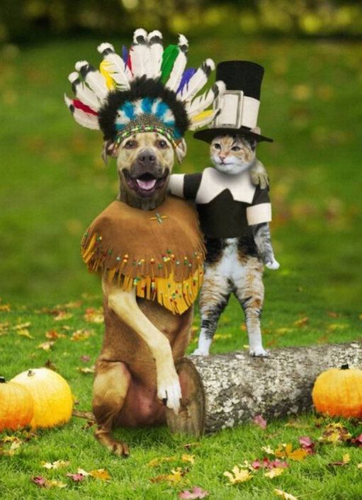 Thanksgiving-Dog-and-Cat-Use
