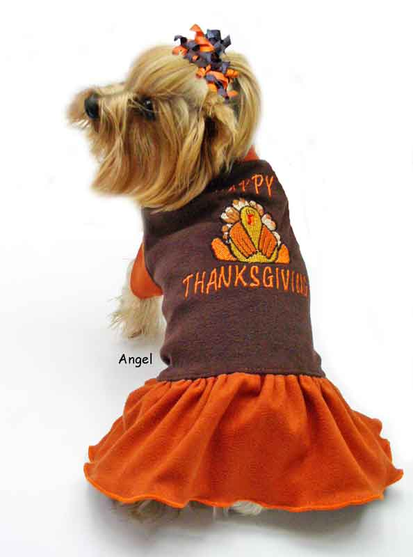 happy-turkey-dress thanskgiving dog