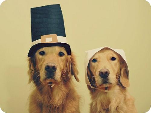 thanksgiving-dog
