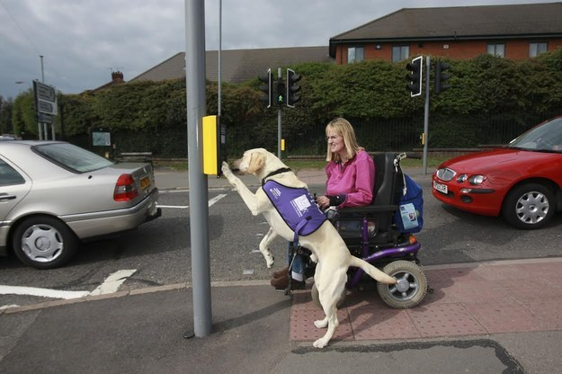 dog helping humans - caters news agency