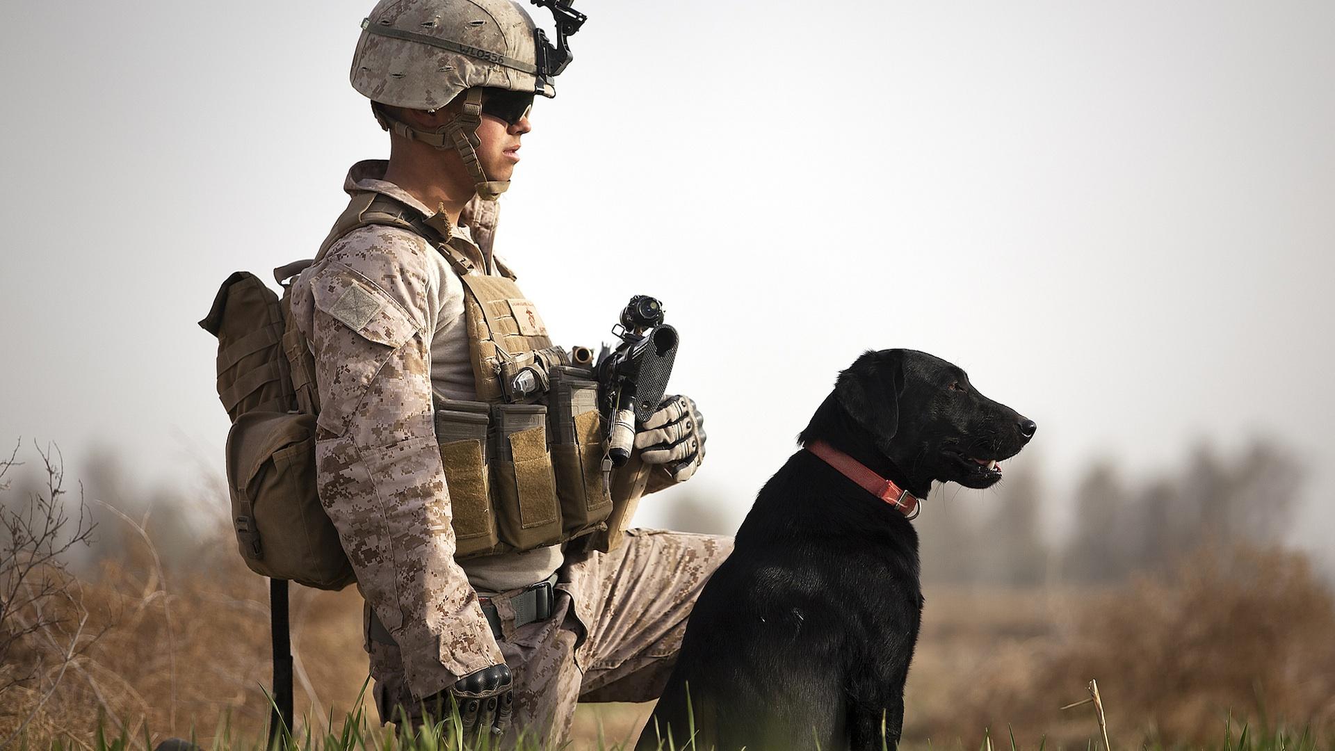 war-dog1