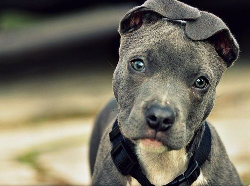a dogs gaze