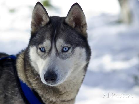 alert dog ears