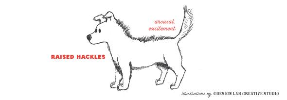 reading dog behavior_hackles