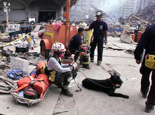 Rescue workers, including a dog trained to sniff f