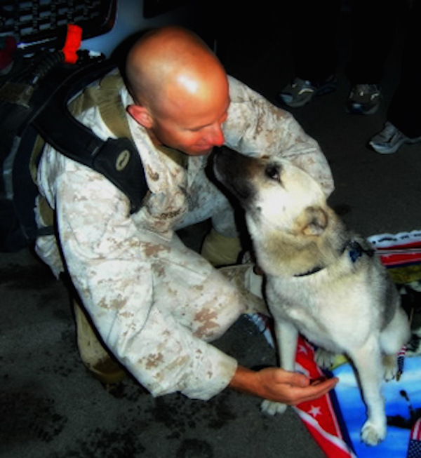 Amazing Tails - The Dog that travelled 70 miles through a warzone to be with his Marine best friend 4