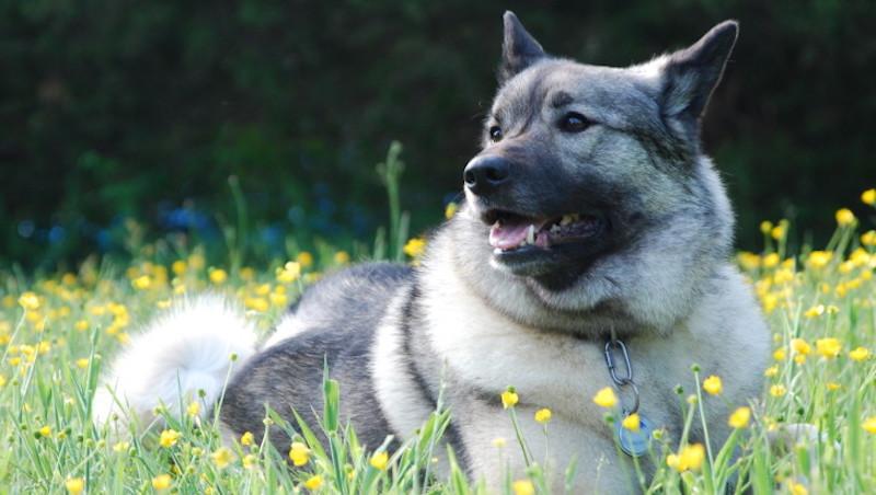 Chara dog