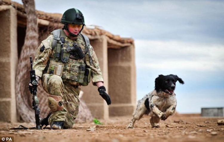 Hero-Dog-Receives-Medal-After-Setting-Record-Of-Most-Bomb-Finds-in-One-Deployment-2